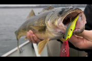 1Source Video: Hook Walleye With These 4 Baits