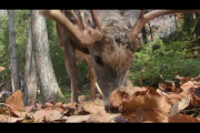 1Source Video: Scouting Deer Food Sources