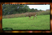 1Source Video: Deer Hunting Phase 3 Tips: Drury Outdoors