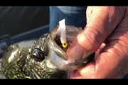 1Source Video: How To Fish Reed Beds For Crappie