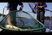 1Source Video: Electro Shock Fishing for Science