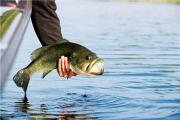 News & Tips: Post-Spawn Bass Fishing