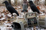 News & Tips: Tips How to Hunt Crows and How Crow Hunting Helps...