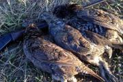 News & Tips: How to Avoid 16 Common Grouse Hunting Mistakes...