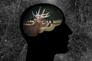News & Tips: Head Hunting: Use Visualization to Become a Better Bowhunter...