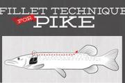 News & Tips: How to Cut 5 Boneless Fillets: Northern Pike & Chain Pickerel  (infographic)...