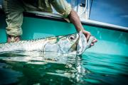 During challenging conditions, cut bait can often be the key that brings trophy tarpon to hand....