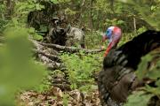 News & Tips: Beginner Turkey Hunting Gear Buying Guide...