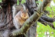 News & Tips: 5 Reasons to Hunt Squirrel & 12 Practical and Essential Hunting Tips...