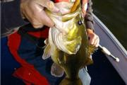 News & Tips: 5 Tips for Late Fall Northern Largemouth Bass...