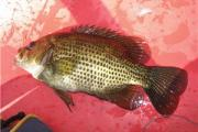 News & Tips: Panfish: Strike Indicators & Wet Fly Rigs That Work...