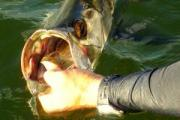 News & Tips: Travel Blog: Fishing Small Tarpon in Campeche, Mexico...