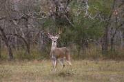 News & Tips: Wind Key to Setting Up for Whitetails