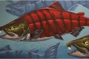 Saber-toothed salmon, as depicted by artist Ray Troll...
