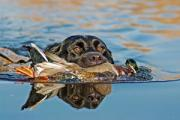 News & Tips: Big River Waterfowl Hunting Tips