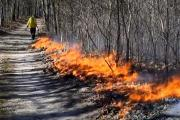 News & Tips: Why Using Prescribed Fire Improves the Forest, Deer & Wildlife Habitat (video)...