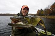 Angler in a boat on a fall day holding up a muskie facing forward baring its teeth