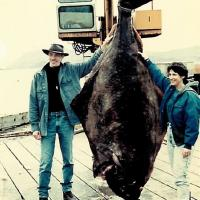Very large flounder held up by a crane